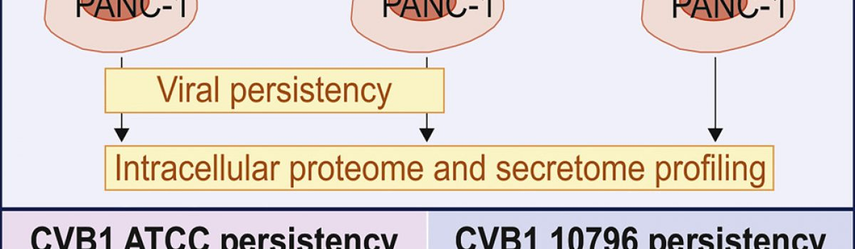 Chronic Enteroviral Infection Modifies Broadly Pancreatic Cellular Functions