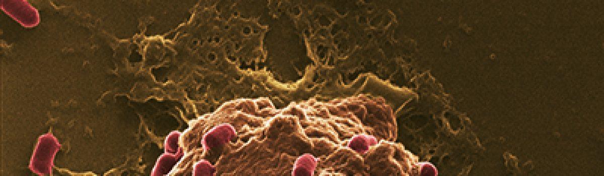 Euro-Bioimaging becomes Euro-Bioimaging ERIC